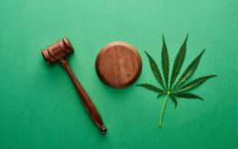 Gavel and cannabis leaves
